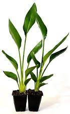 Plants Easy To Grow Indoors Indoor Plants Ebay