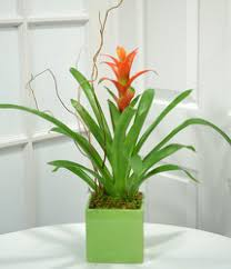 funeral plants dallas florist in dallas blooming green orchid plants funeral flowers