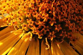 petals mobile wallpaper sunlight colourful star beautiful