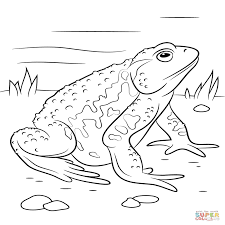 imagenes de un sapo para dibujar faciles inspirado dibujos de animales anfibios para colorear