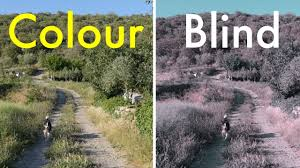 Human Color Blindness How Color Blindness Works Youtube