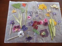 preserve flowers preserving nature with spray paint really 3 steps with