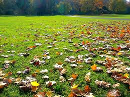 fall lawn care learn about lawn maintenance in autumn
