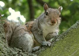 Squirrel In Basement by New Squirrel Virus Suspected In Three Human Deaths Popular Science