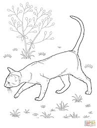 warrior cats coloring pages sad best warrior cats sad coloring pages web of styles and trends