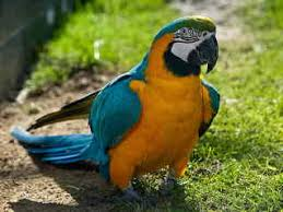 monty python u0027s dead parrot sketch arts u2022meme