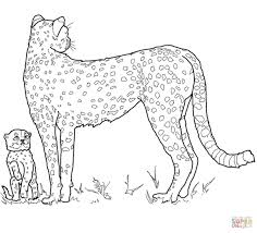 baby cheetah and mother coloring page free printable coloring pages