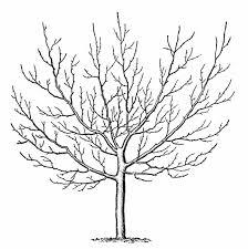 pine tree drawing easy draw8 info