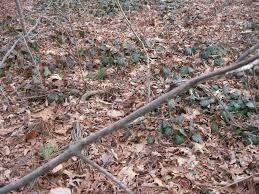 invasive plants you should grow that