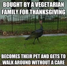 Funny Thanksgiving Meme - bought by a vegetarian family for thanksgiving funny meme image