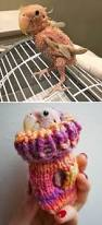 15 tiny animals in tiny sweaters that will make you go aww
