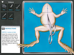 educade teaching tool frog dissection