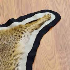 Animal Skin Rugs For Sale Bobcat Hide Rug For Sale Sw4619 Safariworks Taxidermy Sales