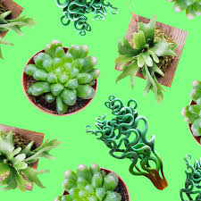 so you want to fill your house with weird plants the fader
