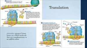 chapter 12 13 dna rna and protein synthesis youtube