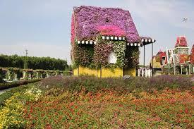 flower house flower house picture of dubai miracle garden dubai tripadvisor