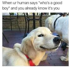 Dog Phone Meme - a dump of dog memes to clear my phone album on imgur
