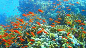 fish wallpaper hd group 56