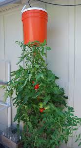 vegetable garden soil for plants general care articles gardening