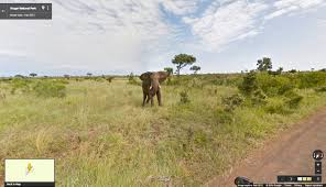 Map Street View Google Street View Takes You On A South African Safari