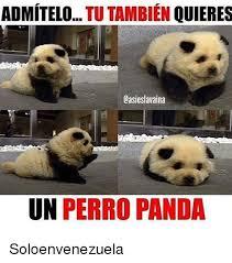 Memes De Pandas - 25 best memes about panda international and espanol panda