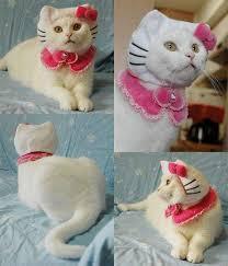 Kitten Halloween Costumes Pet 11 Pet Costumes Images Pet Costumes Animals