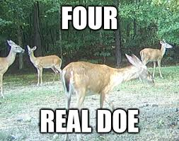 Doe Memes - four real doe 4 real doe quickmeme