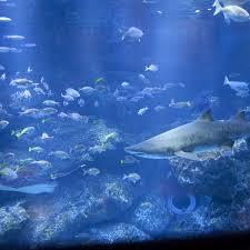 japanese aquarium sumida aquarium live japan japanese travel sightseeing and