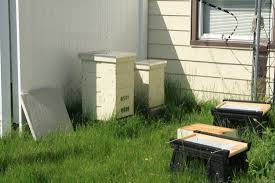 just bee cause beekeeping service