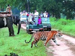 Wildlife tour packages wildlife holidays in india sharpholidays