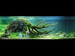 Aga Aquascaping Contest 87 Best Aquarium Images On Pinterest Aquarium Aquascaping And