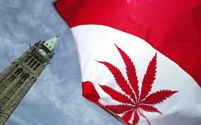 Red Flag Tv Show Canadian Marijuana Awards Show Lights Up With First Ever Gala