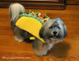 cincinnati bengals halloween costume to dog with love help us decide on a halloween costume for rocco