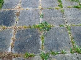How To Remove Weeds From Patio Weed Question From My Nice Neighbour Along The Road Grows On You