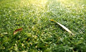 5 popular grass types in nashville tn lawnstarter