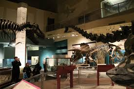 museums extinct monsters hall 2 in 2013 with stan the t rex and the revised hatcher the triceratops in place photo by the author