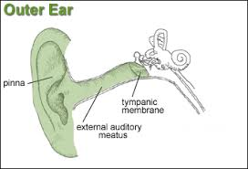 Basic Anatomy Of The Ear Osha Technical Manual Otm Section Iii Chapter 5 Noise