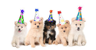 dog birthday party dog birthday party dog cat birthday party animal