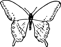 simple butterfly icons png free png and icons downloads