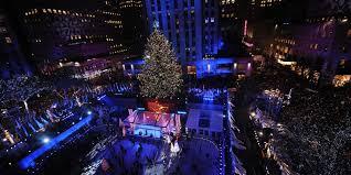 massive backyard tree will be rockefeller center christmas tree