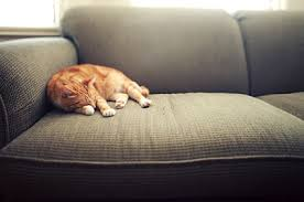 Remove Cat Urine From Sofa Removing Cat Dander Lovetoknow