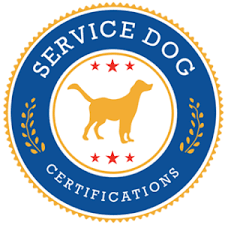 Comfort Pet Certification How To Qualify For An Emotional Support Animal Service Dog