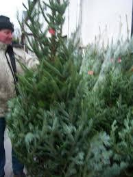 real christmas trees for sale hugh gilmore