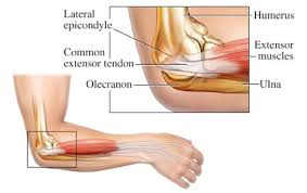Collateral Ligaments Ankle An Overview Of Ulnar Collateral Ligament Injuries