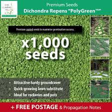 dichondra repens u201cpolygreen