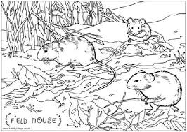 field mouse colouring kids