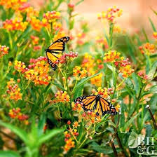 garden flowers images u2013 exhort me