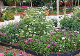 flower garden layout small space cut flower garden ideas costa farms