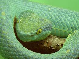a green snake wallpapers top zoos and aquariums in the united states the flipkey blog