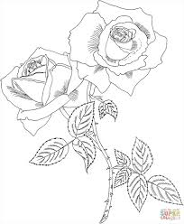 fantastic roses coloring sheets imagine excellent coloring
